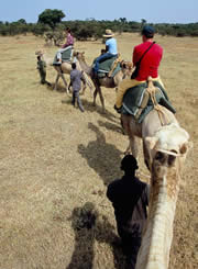 Riding camels in Laikipia.